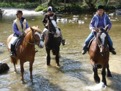 Horses in the river